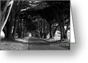 Outdoor Canopy Greeting Cards - Tree Canopy Promenade Road Drive . 7D9977 . Black and White Greeting Card by Wingsdomain Art and Photography