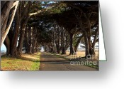 Outdoor Canopy Greeting Cards - Tree Canopy Promenade Road Drive . 7D9977 Greeting Card by Wingsdomain Art and Photography