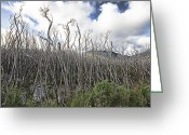 Tidal River Greeting Cards - Tree Cemetery Greeting Card by Douglas Barnard