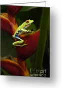 Thelightscene Greeting Cards - Tree Frog 3 Greeting Card by Bob Christopher