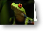 Tree Creature Greeting Cards - Tree Frog 6 Greeting Card by Bob Christopher