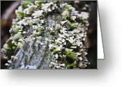 Shell Texture Greeting Cards - Tree Fungus 3 Greeting Card by Teresa Mucha