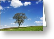 Alone Greeting Cards - Tree in a french landscape Greeting Card by Bernard Jaubert