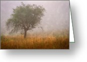 Foggy Morning Greeting Cards - Tree in Fog Greeting Card by Debra and Dave Vanderlaan