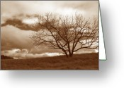 Tree Prints Greeting Cards - Tree in Storm Greeting Card by Kathy Yates