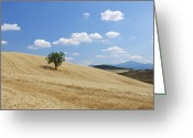 Standing Out From The Crowd Greeting Cards - Tree In Wheat Field With Fluffy Clouds, Summer Greeting Card by Martin Ruegner