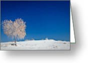 Kaiser Greeting Cards - Tree In White Sands Greeting Card by Ralf Kaiser