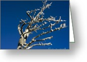 Bizarre Greeting Cards - Tree in winter against a blue sky Greeting Card by Bernard Jaubert