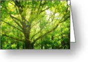 Old Tree Greeting Cards - Tree Greeting Card by Kristin Kreet