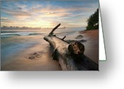 Pacific Islands Greeting Cards - Tree Log Greeting Card by Lee Sie Photography
