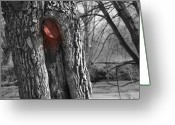 Trees Cut Down Greeting Cards - Tree marked to be cut down Greeting Card by Kyla Schnabel