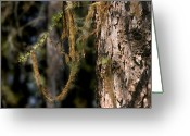 Forest Greeting Cards - Tree moss - Green soft beauty Greeting Card by Christine Till