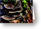 Mushrooms Greeting Cards - Tree Mushrooms Greeting Card by David Patterson
