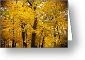 Red Leaves Greeting Cards - Tree of Gold Greeting Card by Kamil Swiatek