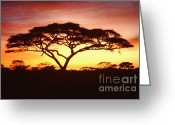 Tree. Acacia Greeting Cards - Tree of Life Africa Greeting Card by Jerome Stumphauzer