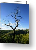 Opulent Greeting Cards - Tree Greeting Card by Oliver Johnston