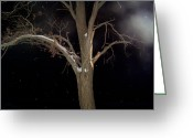 Snowy Night Greeting Cards - Tree On A Dark Snowy Night Greeting Card by Victoria Sheldon