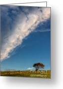 Dry Stone Wall Greeting Cards - Tree on a hill Greeting Card by Rory Trappe