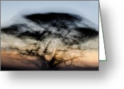 Tree. Acacia Greeting Cards - Tree on the Savannah Greeting Card by Marion McCristall