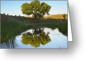 Black Mesa Greeting Cards - Tree Reflecting In Creek Near Black Greeting Card by Tim Fitzharris