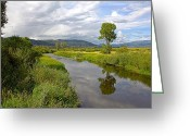 Colorado Mountain Greeting Cards Greeting Cards - Tree Reflection Greeting Card by James Steele