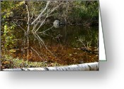 Fall River Scenes Greeting Cards - Tree Reflections Stoney Creek Greeting Card by LeeAnn McLaneGoetz McLaneGoetzStudioLLCcom