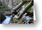 Escarpment Greeting Cards - Tree Roots Greeting Card by Charline Xia