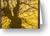 Bare Tree Greeting Cards - Tree shadow Greeting Card by Bernard Jaubert