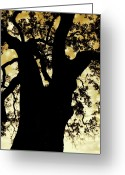 Plant Greeting Cards - Tree Silhouette Greeting Card by Kimberly Gonzales