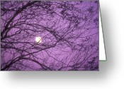 Travel Destinations Greeting Cards - Tree Silhouettes With Rising Moon In Cades Cove, Great Smoky Mountains National Park, Tennessee, Usa Greeting Card by Altrendo Nature
