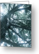 Plants Greeting Cards - Tree Spirits Greeting Card by Kimberly Gonzales