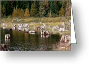 Snow Boarding Greeting Cards - Tree Stumps At Clear Lake Greeting Card by Athena Mckinzie