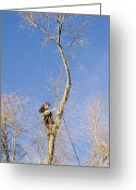 Attending Greeting Cards - Tree Surgery Greeting Card by Sheila Terry