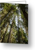 Forested Greeting Cards - Tree Tops Greeting Card by Heather Applegate