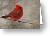 Red Birds Greeting Cards - Tree Treasure Greeting Card by Lois Bryan