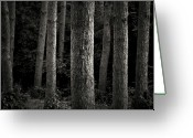 Arbor Greeting Cards - Tree Trunks Greeting Card by Image By Marc Gutierrez
