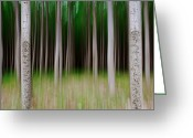 Spokane Greeting Cards - Tree Vertical Panning Greeting Card by Vadim Dmitriyev Photography
