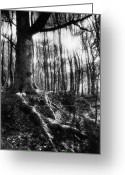 Silver Gelatin Greeting Cards - Trees at the entrance to the Valley of No Return Greeting Card by Simon Marsden