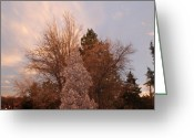 Sunset Scenes. Digital Art Greeting Cards - Trees At The State Capital Greeting Card by Rob Hans