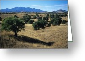 Rita Greeting Cards - Trees Below The Santa Rita Mountains Greeting Card by Bill Hatcher