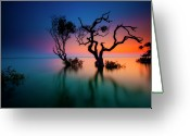 Queensland Photo Greeting Cards - Trees In Bay At Sunset Greeting Card by Visionandimagination.com