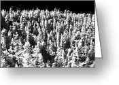 Cliff Dwellers Greeting Cards - Trees in the Canyon Greeting Card by John Rizzuto