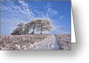 Big Sky Greeting Cards - Trees in the Snow Greeting Card by John Farnan