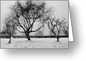 Bare Trees Greeting Cards - Trees in Winter Greeting Card by Dean Harte