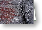 Eutemey Greeting Cards - Trees Greeting Card by Kendall Eutemey
