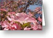 Favorites Greeting Cards - Trees Nature Fine Art Prints Pink Dogwood Flowers Greeting Card by Baslee Troutman Fine Art Prints