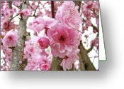 Trees Blossom Greeting Cards - Trees Nature Landscape Pink Spring Flower Blossoms  Baslee Troutman Greeting Card by Baslee Troutman Art Prints Collections