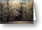 Winter Trees Greeting Cards - Trees of Ice Greeting Card by Karol  Livote