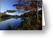 Woodland Plant Greeting Cards - Trees With Fall Colors Along The Still Greeting Card by Michael Melford