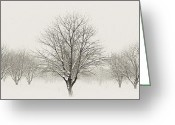Pano Greeting Cards - Treeternity Greeting Card by Jim Speth